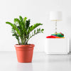 ZZ Plant Potted In Lechuza Rustico Terracotta Planter - Shop Online - My City Plants