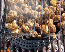 Wine Forest Wild Foods Wild Bible wild morels inn a grilling basket over an open fire
