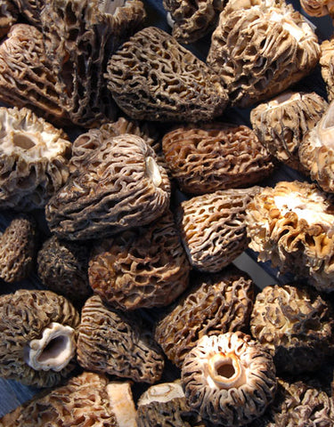 Wine Forest Wild Foods Wild Bible wild morel mushrooms