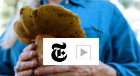 "Video from New York Times Edible Selby ""Hunting Wild Mushrooms with Connie Green"""