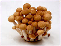 Wine Forest Wholesale Fresh Cultivated Brown Beech Mushrooms