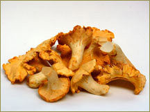 Wine Forest Wild Foods wholesale wild chanterelle mushrooms