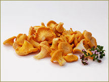 Wine Forest Wild Foods wholesale wild European chanterelle mushrooms