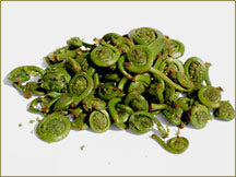Wine Forest Wholesale Wild Fiddlehead Ferns