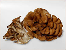 Wine Forest Wholesale Fresh Cultivated Hen of the Woods / Maitake Mushrooms