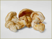 Wine Forest Wild Foods wholesale wild matsutake mushrooms