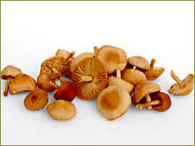 Wine Forest Wild Foods wholesale wild mousseron mushrooms