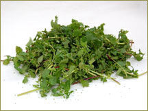 Wine Forest Wholesale Wild Nettles