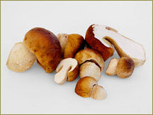 Wine Forest Wild Foods wholesale wild bolete mushrooms porcini mushrooms