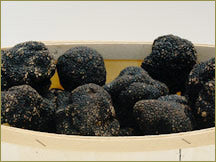 Wine Forest Wholesale Wild Summer Truffles