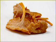 Wine Forest Wild Foods wholesale wild yellow foot mushroom