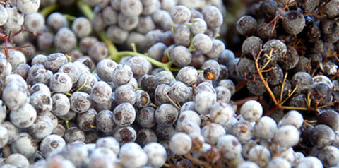 The Wine Forest Blog  frozen elderberries, part of the cleaning process