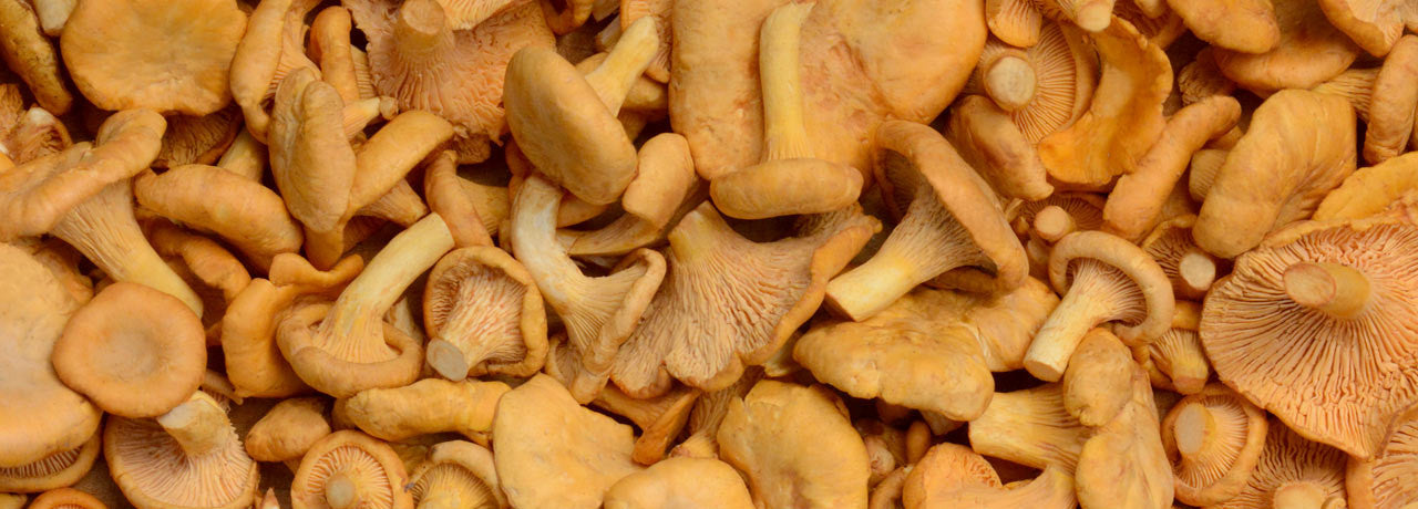 Enjoy following our recipes and instructions for cooking mushrooms like these beautiful chanterelles