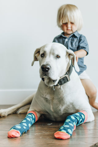 A dog wearing socks while a boy is on his back