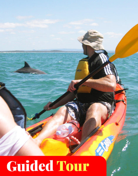 Byron Bay Kayak with Dolphins Tour