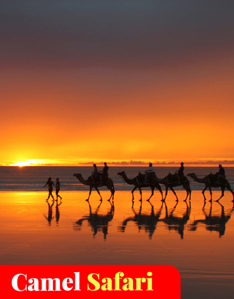 Broome Camel Safari