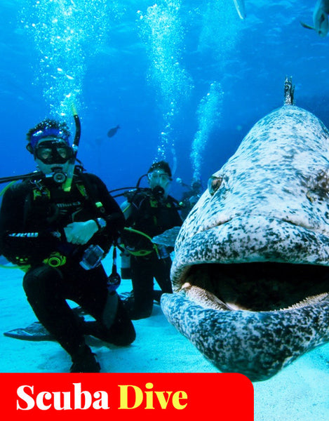 PADI Open Water 4 Days Course with 2 day 1 night on Outter Great Barrier Reef (5 Dives)