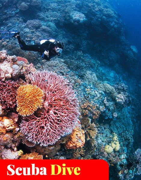 PADI Open Water Island and Reef Dive (4 Dives)