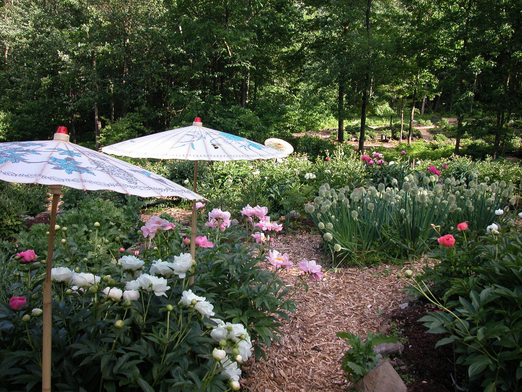 Landscape Design With Peonies Cricket Hill Garden