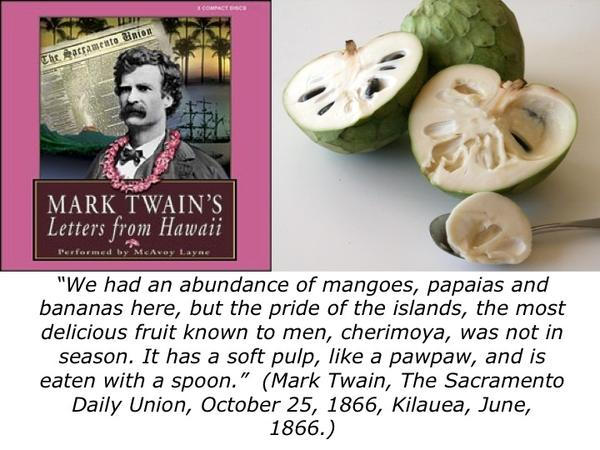 Mark Twain and Connecticut's Champion Pawpaw Tree