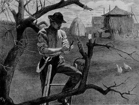 Winslow Homer (American, 1836-1910). Spring Farm Work--Grafting, 1870.