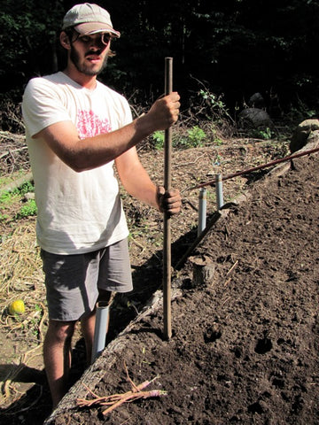 We use an iron breaker bar to make the holes in the garden bed in which the grafts are planted.