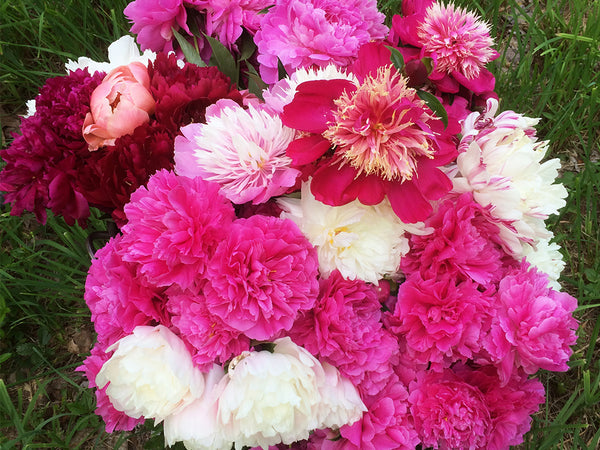 A Flower Arranging with Peonies Workshop Saturday, June 8th 2019