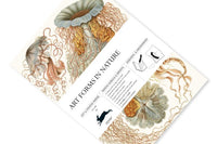 Pepin - Art Forms in Nature Gift and Creative Papers