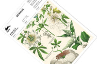 Pepin - Botanical A5 Note Pad