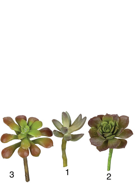 Succulents in three designs