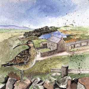 Alex Clark Card, Curlew's Rest