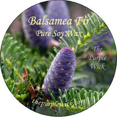 Balsamea Fir-The Purple Wick-The Purple Wick