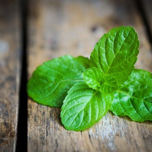 4 Amazing Health Benefits of Peppermint Oil