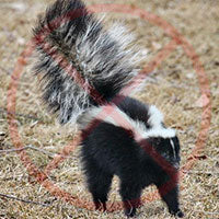 Skunk Repellent
