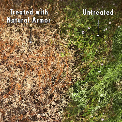 Natural Armor All-Natural Weed Killer — 2.5 Gallon — 4-1 Concentrate