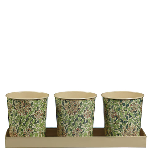 William Morris Honeysuckle Herb Pots - Briers  - 1