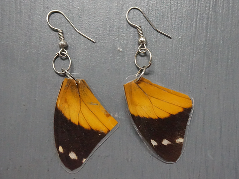 Salvaged Butterfly Wing Earrings - Fair-Trade from Ecuador - CleverElement  - 1