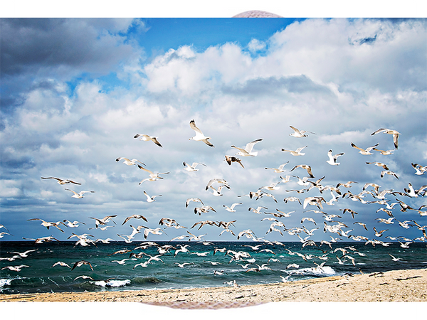 Local Photography Printed on Aluminum - Sea gulls