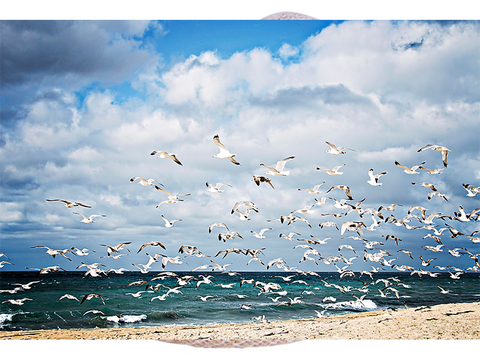 Local Photography Printed on Aluminum - Sea gulls - CleverElement