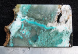 Blue Opal Wood Rock Slab 08