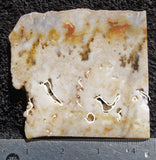 Graveyard Point Plume Agate Rock slab 30