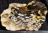 Petrified Peanut Wood Rock slab 11