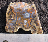 Reyes agate Rock slab 62