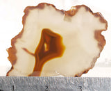 Condor Agate Rock Slab 56