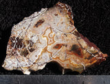 Mexican Crazy Lace Agate Rock slab 43