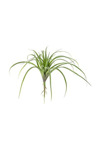 Large Artificial Air Plant - Les Spectacles French Industrial