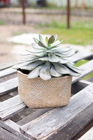 Woven Basket Cement Planter Medium