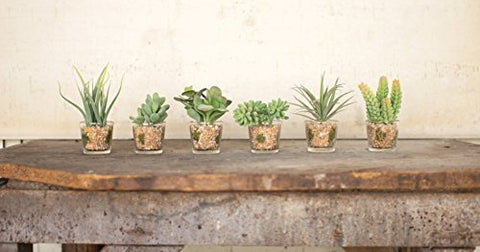 Set Of 6 Artificial Succulents In Glass Containers - Les Spectacles French Industrial