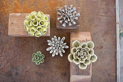 Set Of Five Greys And Greens Ceramic Succulents