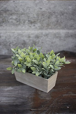 Artificial Thyme In A Rectangle Wooden pot - Les Spectacles French Industrial